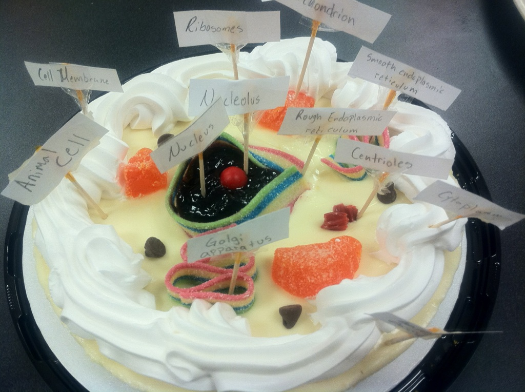 Animal cell model cake labeled - photo#14